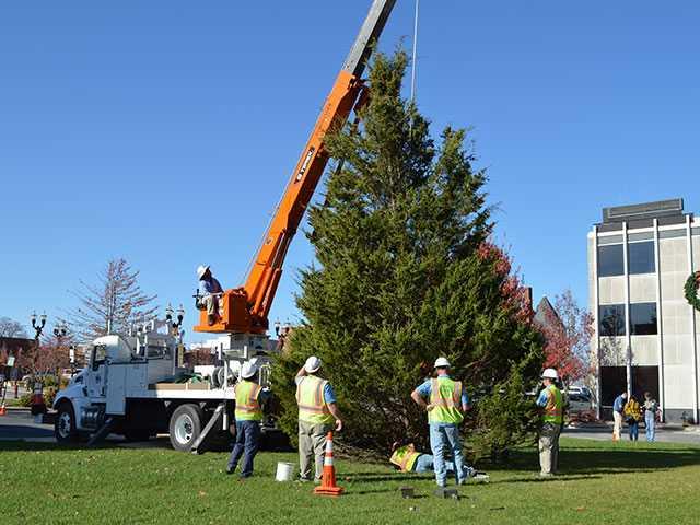 City seeks Christmas tree