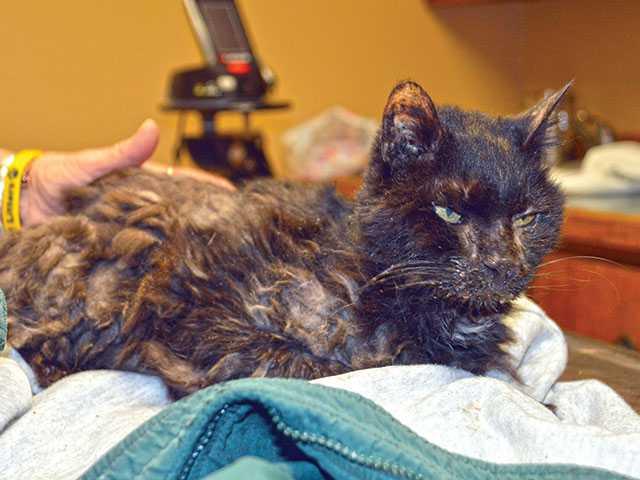 Vet nursing abandoned cat back to good health