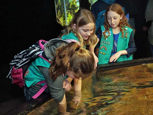 Aquarium offers discount to college students, scouts