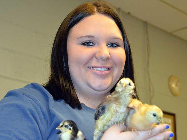 Fine, feathered friends make nice companions