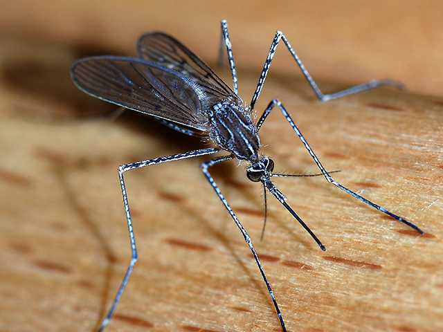 Experts warn about pests