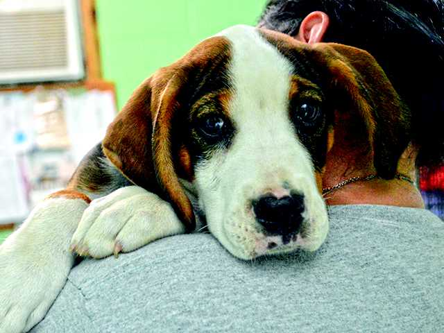 Pet of the Week - Todd