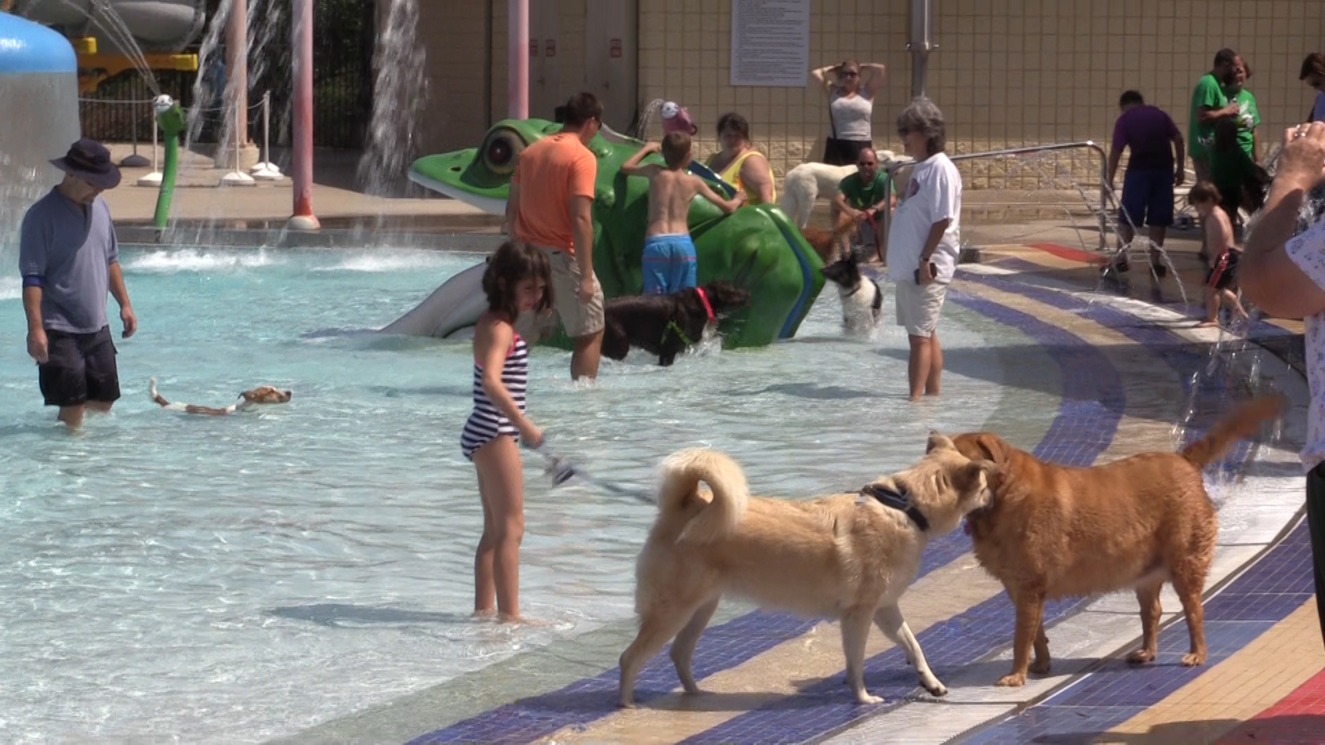 VIDEO - Doggie Pool Party