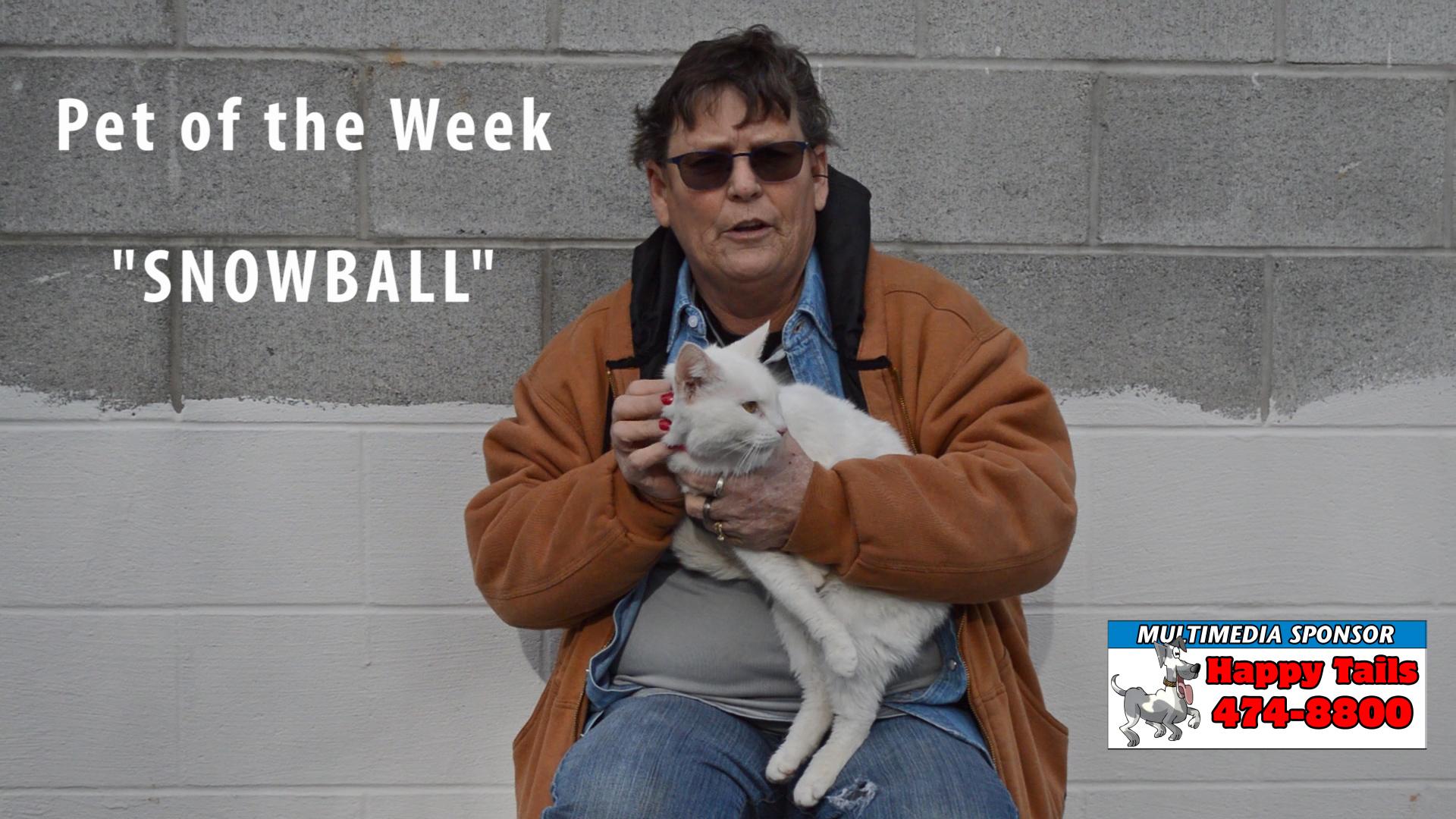 VIDEO: Pet of the Week - Snowball