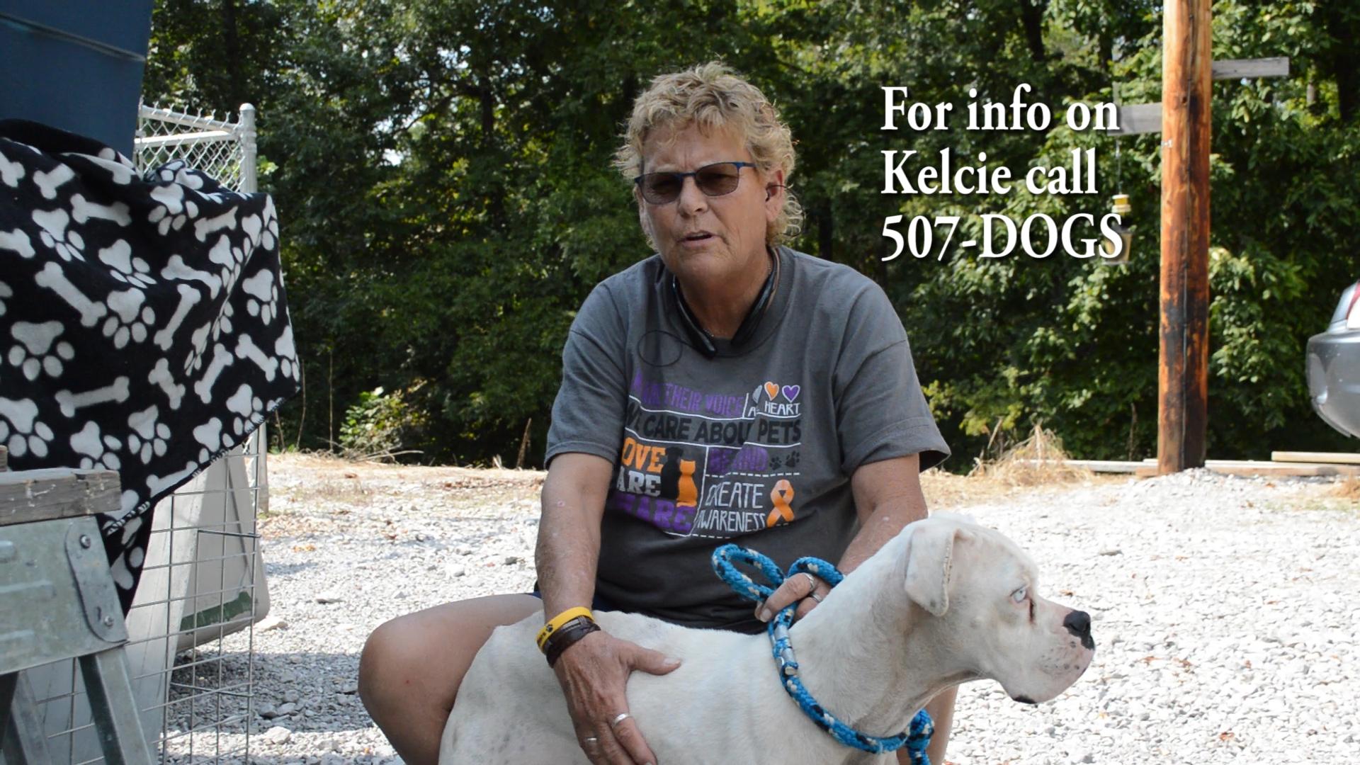 VIDEO - Kelcie is pet of the week