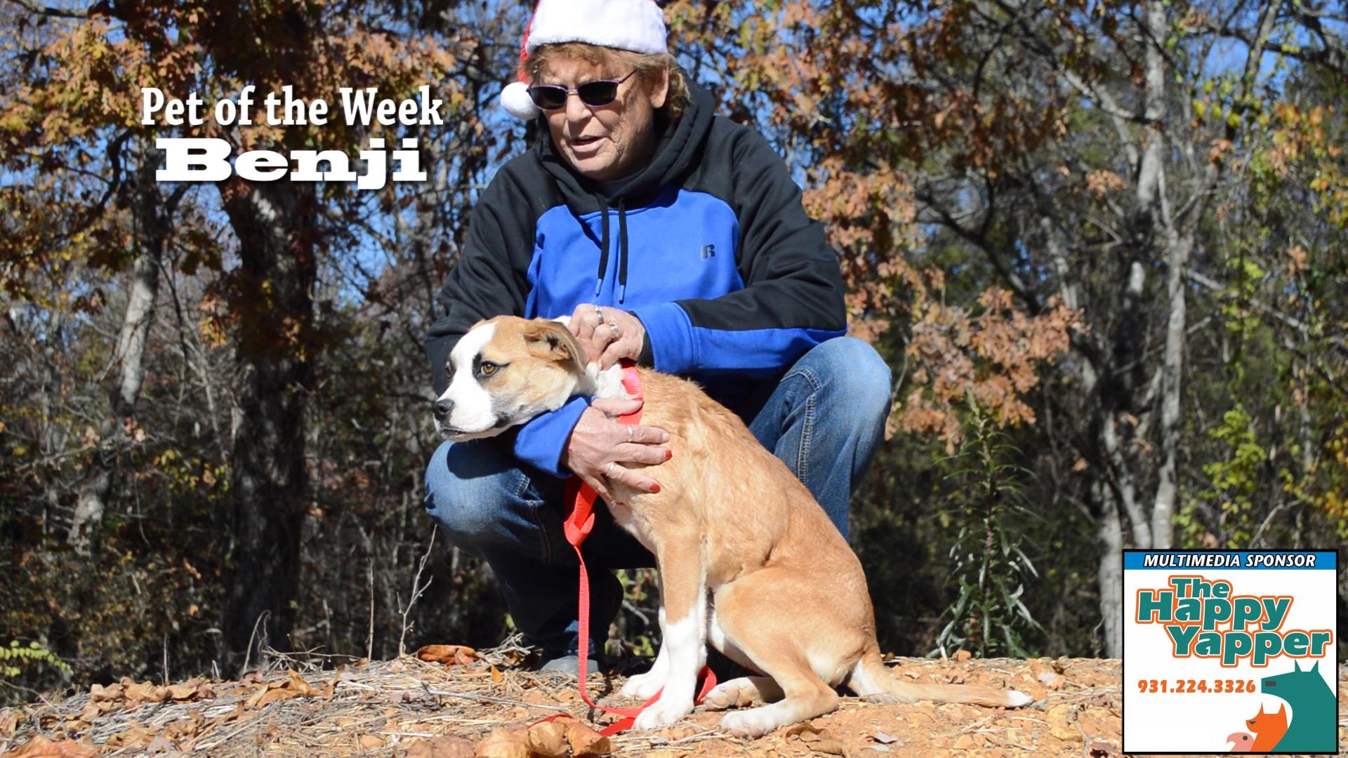VIDEO: Pet of the Week - Benji