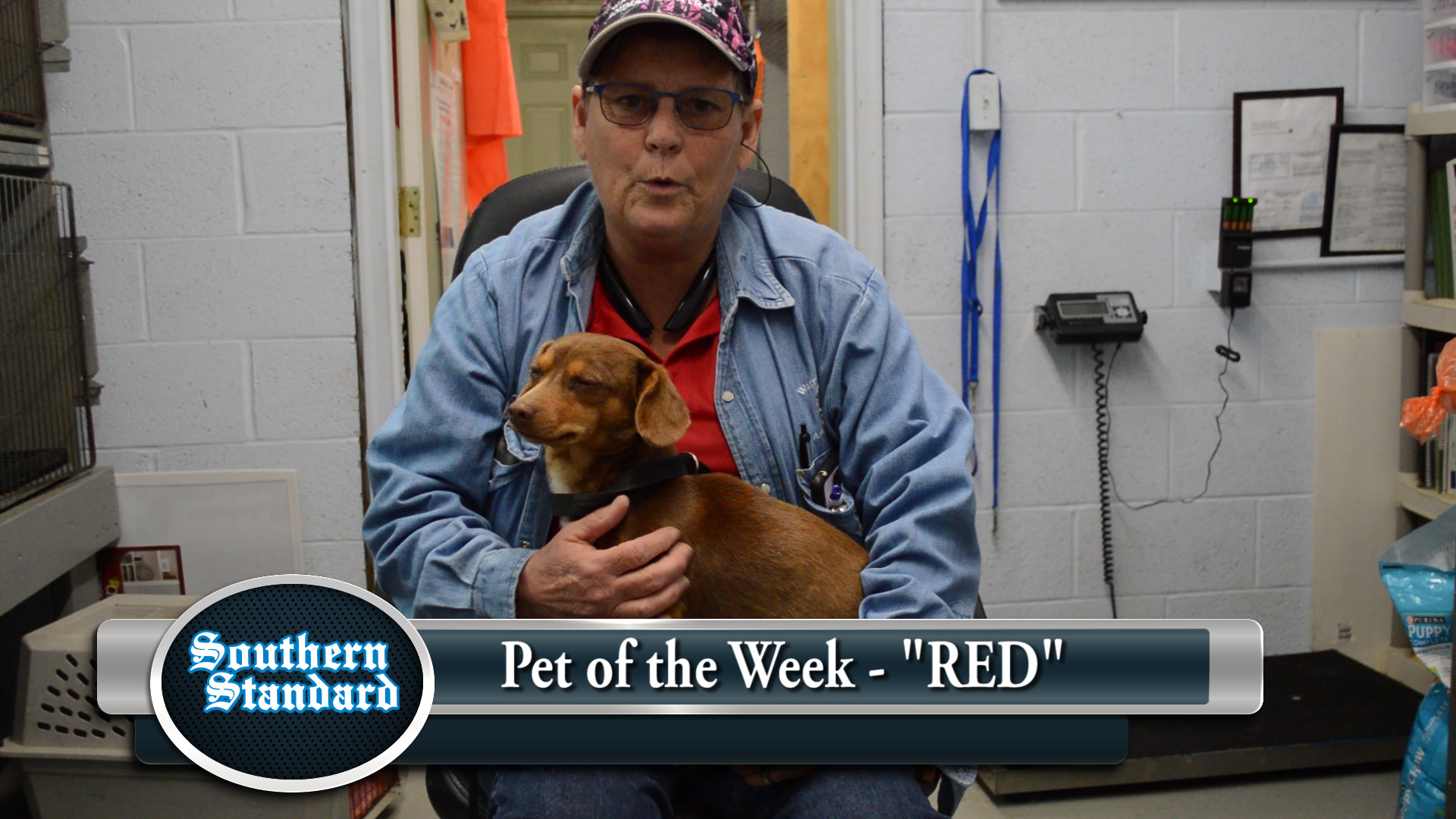 VIDEO: Pet of the Week - Red