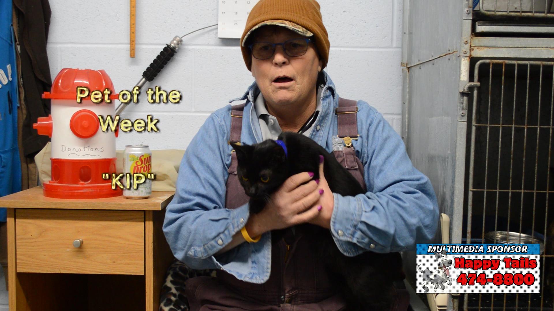 VIDEO: Pet of the Week - Kip