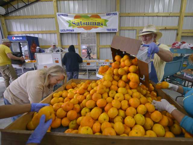 A Taste of Bulloch County Sunshine!