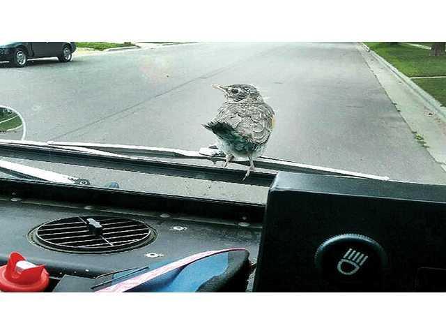 Rockin' Robin hitches a ride