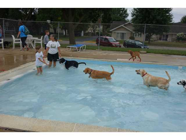 A day for doggies to take a dip in the pool