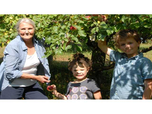 Community Hunger Solutions volunteers pick apples at Turkey Ridge Organic Orchard