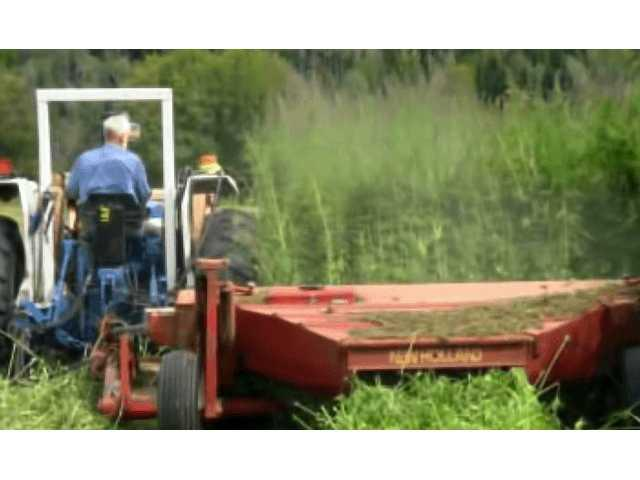 Momentum gathers in state for industrial hemp
