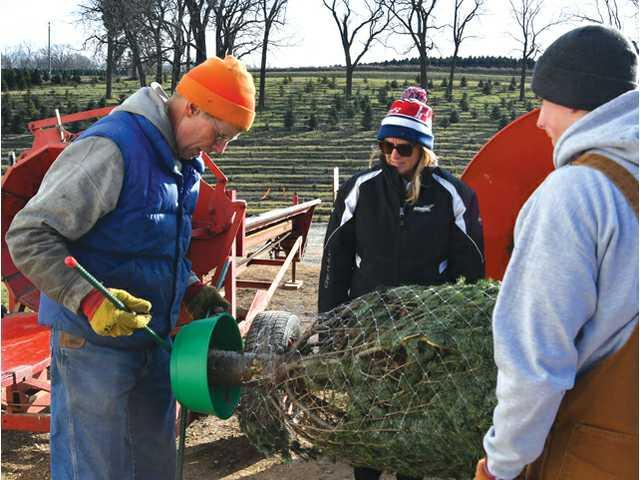 Cooks find success- and plenty of holiday spirit- raising Christmas trees