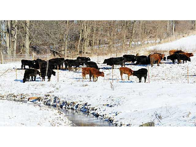 Workshop about overwintering cattle in Coon Valley