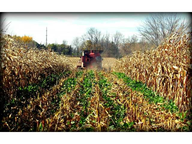 Growing cover crops is increasingly a focus