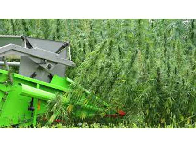 Industrial hemp rule finalized