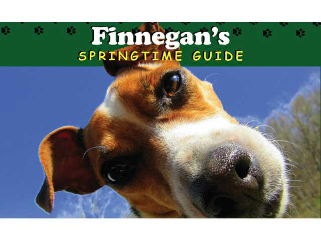 Independent columnist releases a new kid's book in 'Finnegan' series