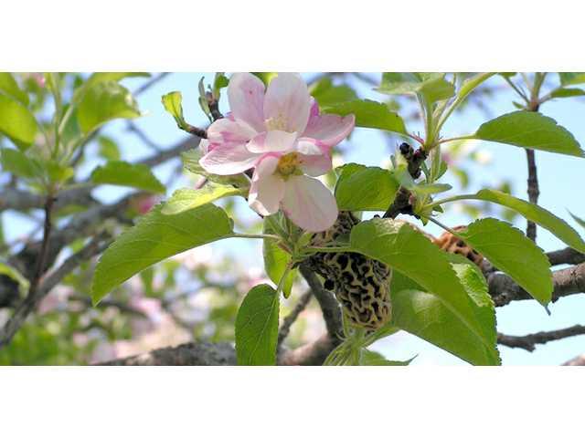 Turkey Ridge Organic Orchard celebrates 30 years