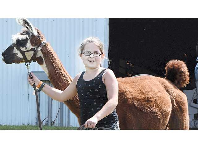 Crawford County Fair announces award-winning entries