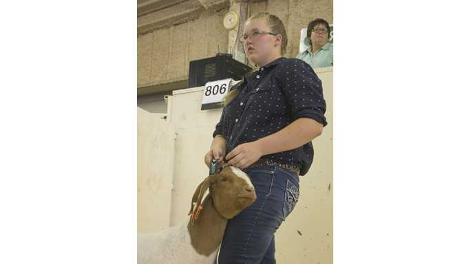 Fairs, 4-H, animal husbandry, and animal auctions