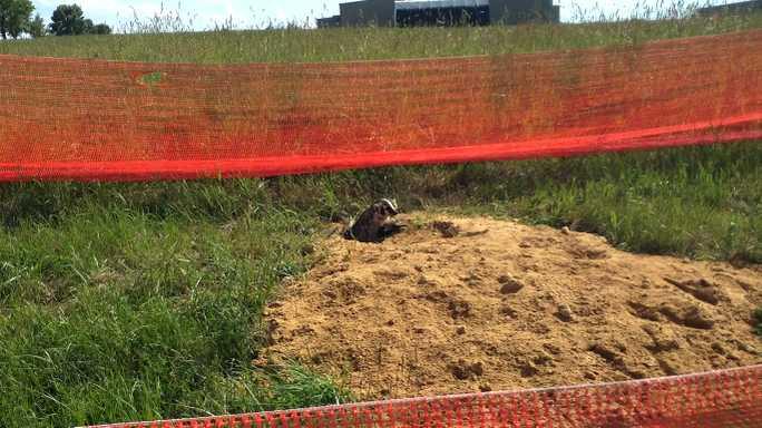 Gophers, ground squirrels remain prevalent in Fennimore's Business Park